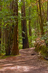 Montgomery Woods Trail